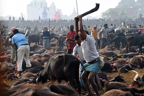 SC-Rejects-PIL-Animal-Sacrifice