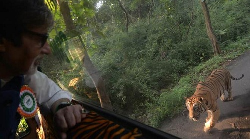 Tiger-Chase-Amitabh-Film-City