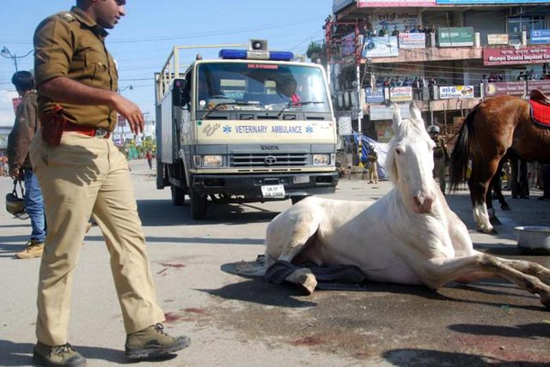 Shaktiman Police Horse Attacked by BJP MLA